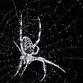 The Web by Bob Stevens