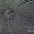 The Web by Nola Lee Kelsey