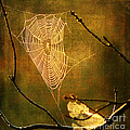 The Web We Weave by Darren Fisher