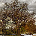 The Welcome Tree by Jerry Gammon