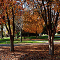 The Well In The Distance-davidson College by Paulette B Wright