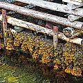 The Wharf by Perla Copernik
