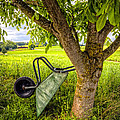 The Wheelbarrow by Debra and Dave Vanderlaan
