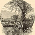 The White Mountains From The Conway Meadows 1872 Engraving by Antique Engravings