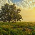 The White Oak Tree by Gwen Cross