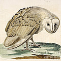 The White Owl by British Library