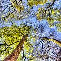 The Wild Forest by David Pyatt