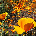 The Wildflowers Are Here And Spring Has Arrived by Lucinda Walter