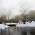 The Willows In Winter - Newtown Square Pa by Bill Cannon