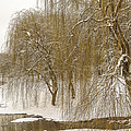 The Willows by William Groah