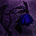 The Wilted Blue Rose by Jose A Gonzalez Jr