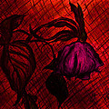 The Wilted Pink Rose by Jose A Gonzalez Jr