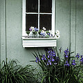 The Window Box by Lucinda Walter