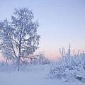 The Winter Light by Veikko Suikkanen