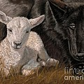 The Wolf And The Lamb by Sheri Gordon