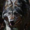 The Wolf Digital Art by Ernie Echols
