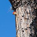 The Woodpecker Is In by John M Bailey