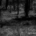 The Woods Are Lovely Dark And Deep by RC DeWinter