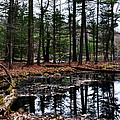 The Woods Reflected by Devin OBrien