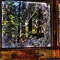 The Woods Through A School Bus Window by Douglas Barnett