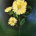 The Yellow Daisy by Wanda Dansereau