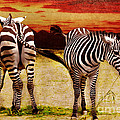 The Zebras by Angela Doelling AD DESIGN Photo and PhotoArt