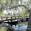 The Zen Bridge by Eclectic Captures