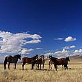 Their Desert Home by Gene Praag