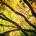 Then Autumn Arrives 03 by Thomas Woolworth