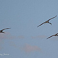 There 's Our Spot Said The Sand Hill Crane by Tom Janca