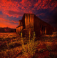 There Was A Time by Phil Koch