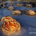 The Egg Factory  Bisti/de-na-zin Wilderness At Night by Bob Christopher