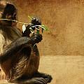 Thinking Monkey by Christine Sponchia