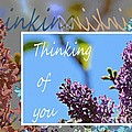 Thinking Of You 2 by Barbara Griffin