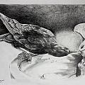 Thirsty Crow by Derrick Higgins