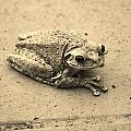 This Old Frog by Chuck  Hicks
