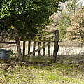 This Old Gate by Darrell Clakley