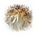 Thistle Abstract 14-1 by Maria Urso