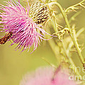 Thistle And Friend by Lois Bryan