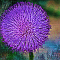 Thistle by Charles Muhle