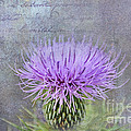 Thistle by David Arment