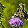 Thistle Do Just Fine by Gary Holmes