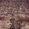 Thistle Field by David Hohmann