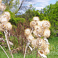 Thistle Me This by Mary Mikawoz