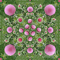 Thistle Star Mandala by Susan Bloom