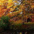 Thoreau's Splendour by Connie Handscomb