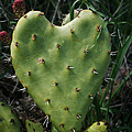 Thorny Heart by Ellen Henneke