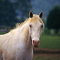 Thoroughbred Mare by Buddy Mays