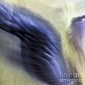 Thor Wing by Gunnar Orn Arnason