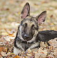 Those Ears by Linda D Lester